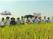 Bắc Giang: Xây dựng mô hình sản xuất lúa gạo chất lượng cao