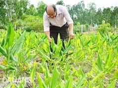 Đà Nẵng: Hội tụ các yếu tố thuận lợi để phát triển dược liệu sạch