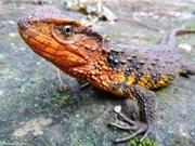 Phát hiện thêm 65 loài mới ở Việt Nam