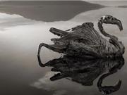 Tanzania: Hồ nước khiến động vật hóa đá