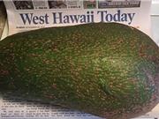 Quả bơ 2,4 kg có thể phá kỷ lục thế giới ở Hawaii
