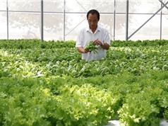 Nghiệm thu mô hình sản xuất rau an toàn tại thị xã Quảng Trị