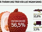 Logistics yếu, sản phẩm nông nghiệp khó tham gia sân chơi toàn cầu