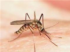 Những phát hiện thú vị về loài muỗi