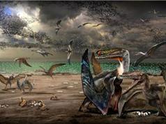 Phát hiện hơn 200 hóa thạch trứng thằn lằn bay ở Trung Quốc