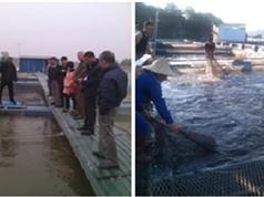 Hà Nội: Kỹ thuật nuôi cá trắm đen Mylopharyngodon piceus trong ao, trong lồng