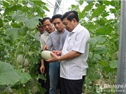 Nghệ An phấn đấu nông nghiệp công nghệ cao chiếm 20% giá trị sản xuất
