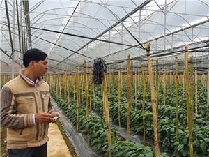 Xây dựng chuỗi liên kết để thúc đẩy sản phẩm nông nghiệp