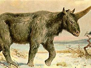 Phát hiện hộp sọ hóa thạch của kỳ lân Siberi
