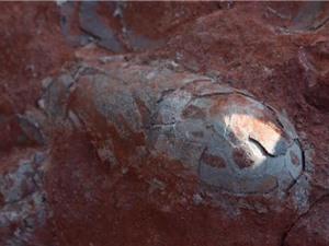 Phát hiện ổ 20 trứng khủng long 130 triệu năm nguyên vẹn ở Trung Quốc