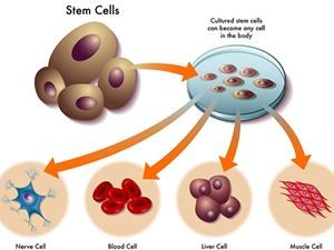 Công nghệ tế bào gốc: Việt Nam có gì ?