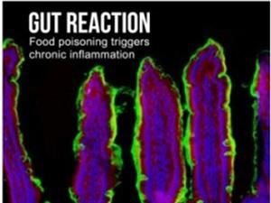 Ngộ độc thực phẩm nhiều lần có thể đe dọa tính mạng
