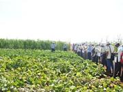 Phát huy mối liên kết để nền nông nghiệp phát triển mạnh mẽ