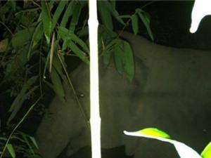Phát hiện đàn voi rừng trong Vườn quốc gia Vũ Quang