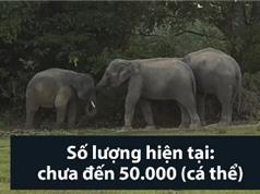 Những loài động vật có nguy cơ tuyệt chủng năm 2018