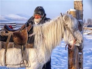 Khám phá nơi lạnh giá nhất thế giới âm 60 độ C với loài ngựa lùn siêu khỏe