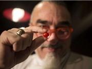 Israel sắp ra mắt loại cà chua nhỏ nhất thế giới