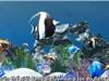 Phương pháp phục hồi những rạn san hô bị hủy hoại