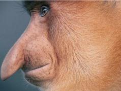 Dành hai năm để chụp những loài có nguy cơ tuyệt chủng
