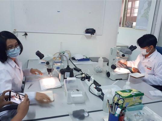 Thả muỗi Wolbachia để diệt muỗi sốt xuất huyết từ tháng 3/2018
