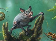 Phát hiện loài dơi lớn từ hóa thạch 19 triệu năm