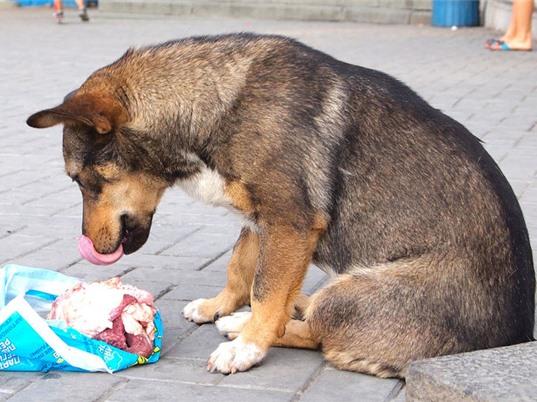 Thịt sống gây nguy hiểm cho cả thú nuôi và chủ