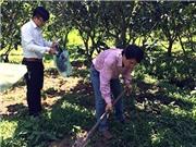 PGS-TS Tất Anh Thư - ĐH Cần Thơ: Phát triển vi sinh vật bản địa có lợi cho cây trên đất phèn
