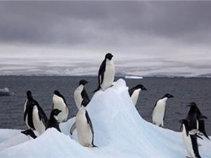 Khu bảo tồn động vật hoang dã lớn nhất thế giới tại Nam Cực