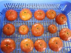 Bắc Giang: Công nghệ bảo quản cam đường canh bằng màng chitosan