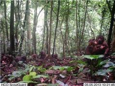 Bẫy ảnh phát hiện nhiều động vật quý tại rừng Động Châu-Khe Nước Trong