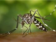 Muỗi có thể được huấn luyện để không đốt người