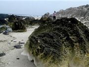 Hóa thạch san hô được phát hiện trên đảo Lý Sơn