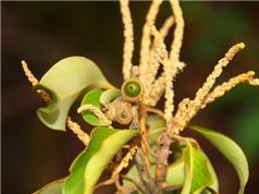 Phát hiện loài thực vật mới ở Vườn Quốc gia Vũ Quang