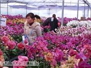 Hà Nội: Giới thiệu nhiều giống hoa mới kết hợp trình diễn công nghệ
