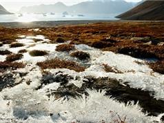 Bắc Cực tích trữ lượng thủy ngân lớn nhất thế giới