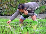 Nông thôn Trung Quốc đang dần phổ cập thanh toán di động