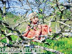 Ghé Mộc Châu ngắm thiên đường hoa mận