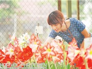 """Loa kèn đỏ: Hoa """"bờ rào"""" thành hoa thương mại"""