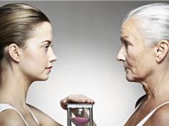 Tìm ra chìa khóa giúp cơ thể sinh vật không già theo tuổi tác