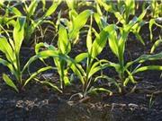 Đá silicat giúp tăng sản lượng cây trồng và hạn chế phát thải khí CO2