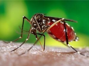 Lý do khiến một số người hay bị muỗi đốt hơn