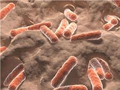 Phát hiện chủng vi khuẩn sống trên da có thể ngăn chặn ung thư