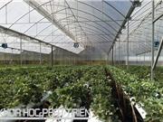 Nông nghiệp thông minh ở Việt Nam: Nhìn từ cách tiếp cận của Lâm Đồng