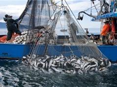 Diện tích đánh bắt cá thương mại chiếm hơn một nửa diện tích đại dương