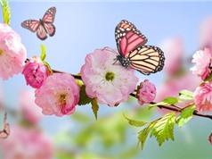 Mùa xuân đến sớm hơn trên Trái Đất do biến đổi khí hậu