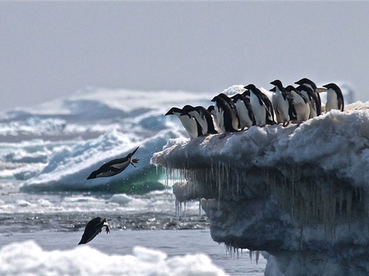 Phát hiện vương quốc chim cánh cụt bí mật tại Nam Cực