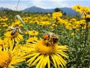 Những yếu tố ảnh hưởng đến chất lượng mật ong