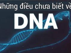 Những điều bạn chưa biết về DNA của con người