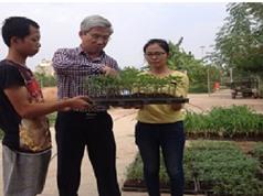 Lần đầu Hải Phòng sản xuất bầu ươm cây giống theo hướng công nghiệp