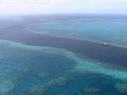 Thử nghiệm thành công lá chắn bảo vệ rạn san hô lớn nhất thế giới